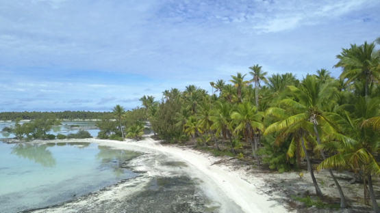 Reao, aerial drone video of the lagoon and coconut forest, Tuamotu, french Polynesia, 4K UHD