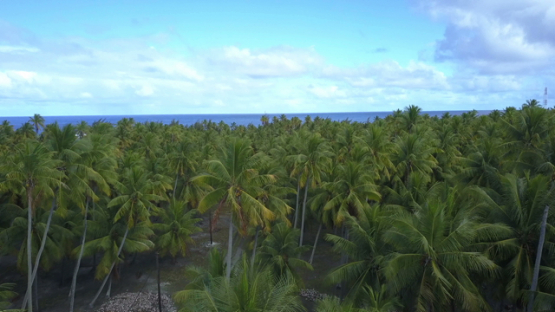 Reao, aerial drone video of the island and coconut grove, Tuamotu, Polynesia, 4K UHD