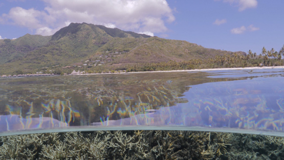 Moorea, coral formation and island in the background in the lagoon, French Polynesia