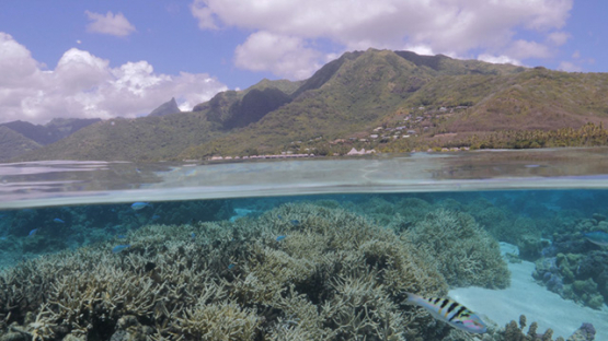 Moorea, coral formation in the lagoon, and island in the background, French Polynesia