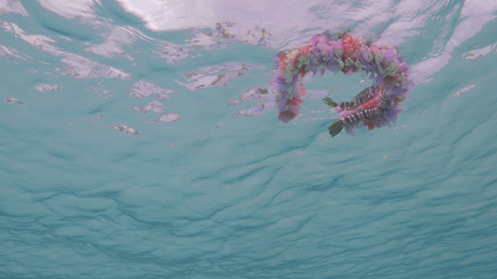 Flowers crown floating on the surface of the lagoon, from below the sea, Moorea, Polynesia, 4K UHD
