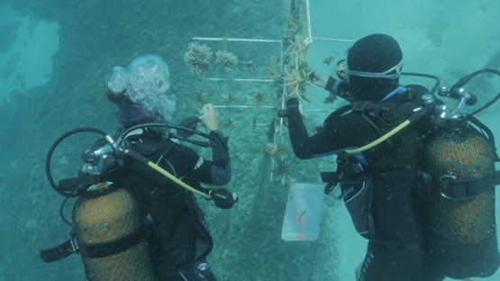 Scientists Scuba divers working on Coral station in the lagoon, Moorea, French Polynesia