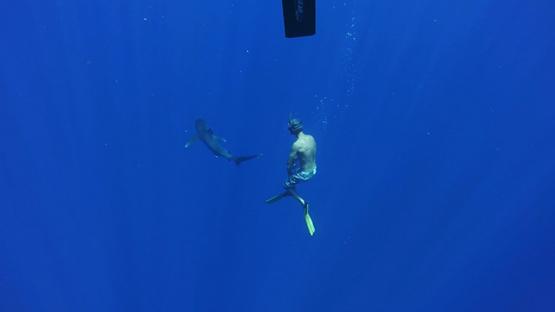 Oceanic shark swimming close to the camera, Moorea, French Polynesia