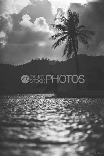 Sunset and landscape of Bora Bora, beach and coconut tree, shot black and white