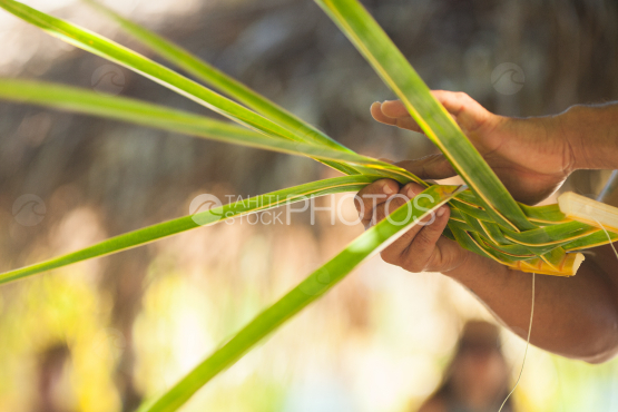 Braiding coconut leaf by polynesian, Bora Bora