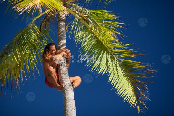 Bora Bora, polynesian climbing on the coconut tree