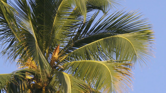 Slow motion of palmtree and blue sky