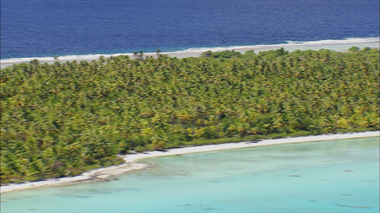 Tikehau, Aerial shot of coconut trees forest by the reef,  French Polynesia