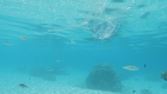 Pollution, plastic bag floating in the lagoon, Moorea, 4K UHD