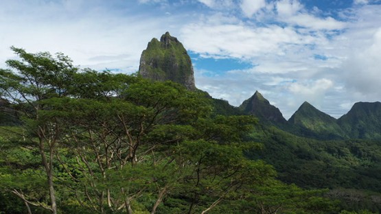 Aerial drone view of the mountain Moua Roa behind the tree, Moorea 4K UHD