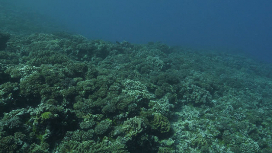 Fakarava, drifting over the coral reef in the pass