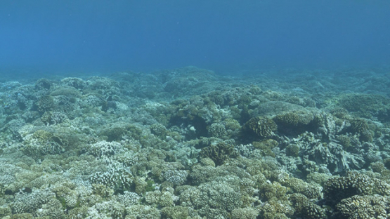 Fakarava, coral reef in the pass