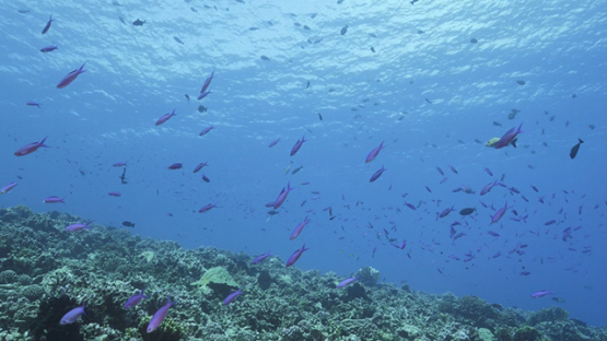 Fakarava, outer reef and tropical fishes