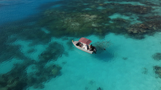 Rangiroa, aerial view of a small motor boat in the lagoon and schooling fishes, 4K UHD