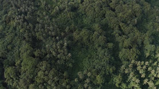 Tahiti, aerial view of Te Pari, forest of tropical trees, 4K UHD