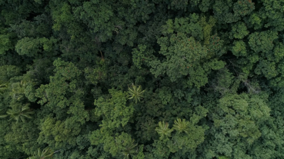 Tahiti, aerial view above the tropical forest, Paea, 4K UHD