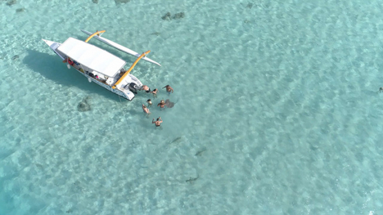 Moorea, aerial view of tourists and sting rays around an outrigger boat in the lagoon, 4K UHD