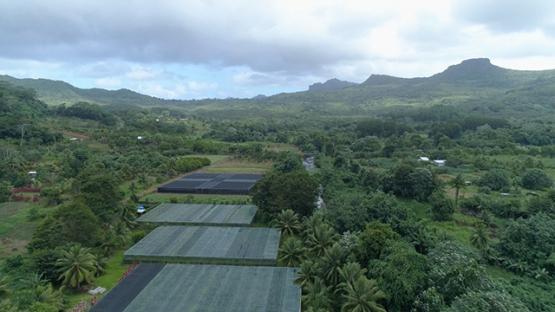 Raiatea, aerial view of vanilla plantation in the valley of Faaroa, 4K UHD