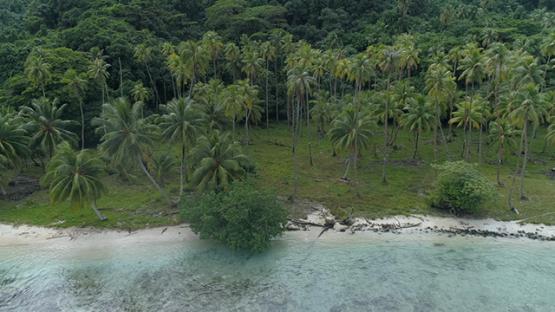 Tahaa, aerial view along the wild sand beach, 4K UHD