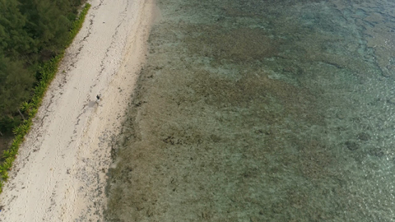 Rurutu, Aerial view of a polynesian and his horse galopping on the beach, 4K UHD
