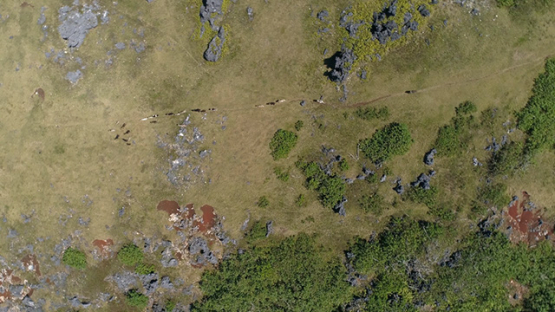 Rurutu, aerial view of a herd of goats on the top of the  hill, 4K UHD