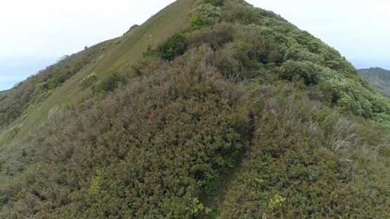 Tubuai, aerial view of the top of mount Taitaa, 4K UHD