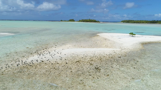 Rangiroa, aerial view of noddi or marine birds on a sand islet, 4K UHD