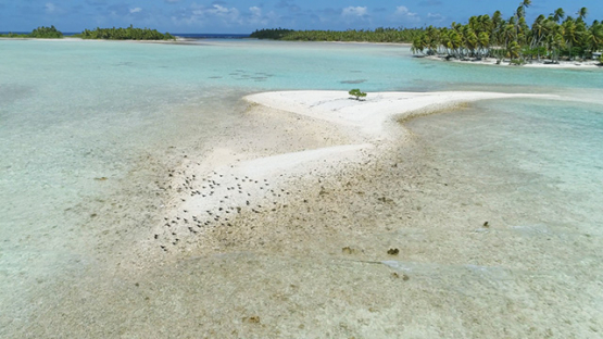 Rangiroa, aerial view of marine birds on a sand islet, 4K UHD