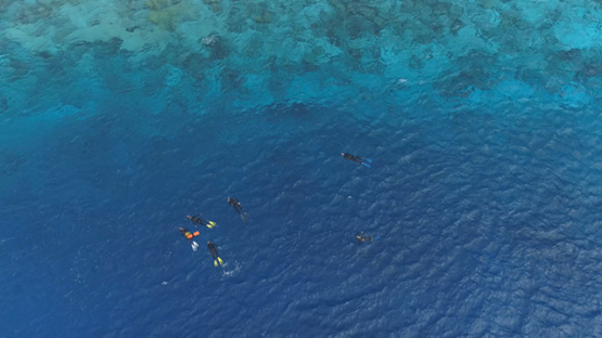 Rangiroa, aerial view of swimmers drifting in the Tiputa pass, 4K UHD