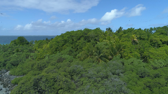 Tikehau, aerial view of marine birds island, 4K UHD