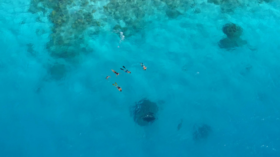 Tikehau, aerial view above tourists watching a manta ray, 4K UHD