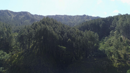 Nuku Hiva, aerial view of the forest of Caraibbean pines, 4K UHD