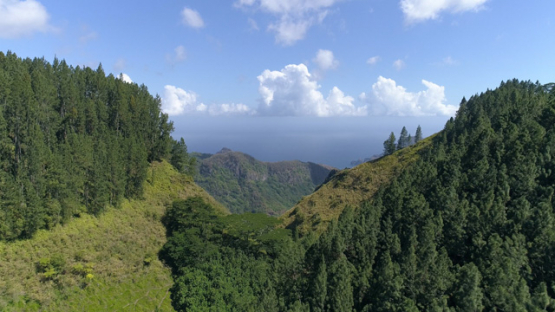 Nuku Hiva, aerial view of the forest near the cliff of Hakaui 4K UHD