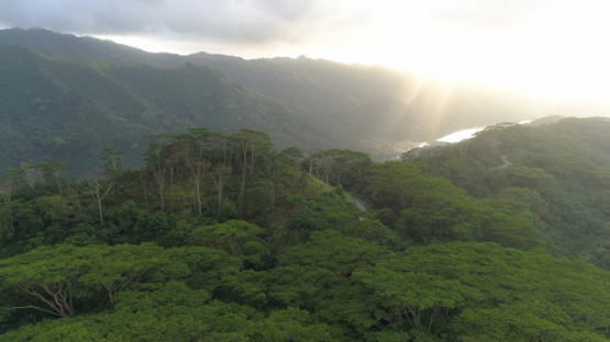 Nuku Hiva, aerial view of the valley Taipivai above the forest, 4K UHD
