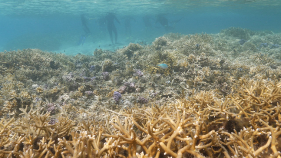 Moorea, Coral formation in the lagoon, shallow Under the surface