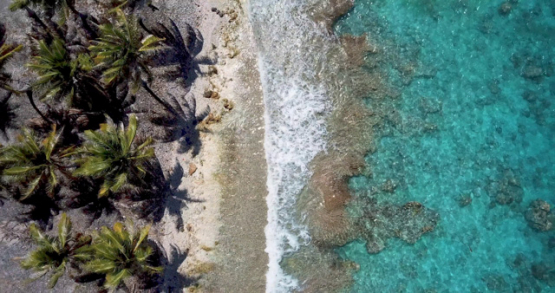Rangiroa 4k drone, aerial view of a beach with palm trees anf reef