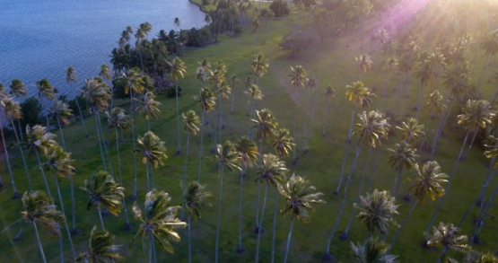 Tahiti 4K drone, aerial view over palm trees around Papara at sunset