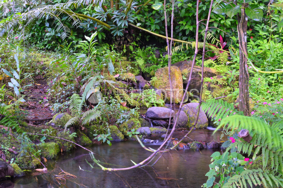 Tahiti, tropical forest at the Vaipahi Water Garden