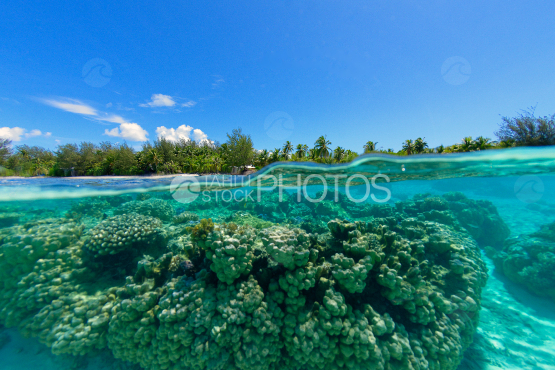 corals in the lagoon of bora bora