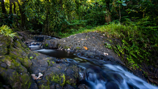 Tahiti, timelapse of a wet forest with a rocky river, 4K UHD