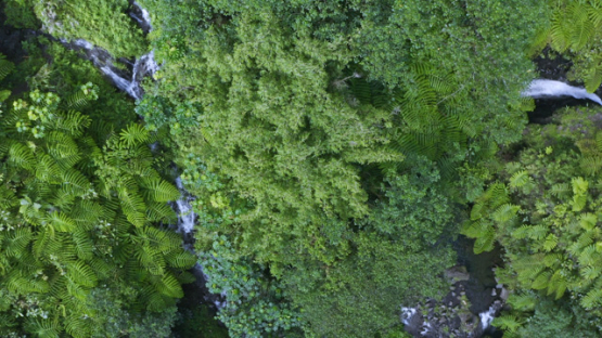 Tahiti, Hitiaa valley, aerial view by drone above the waterfall Fara Ura, 2K7