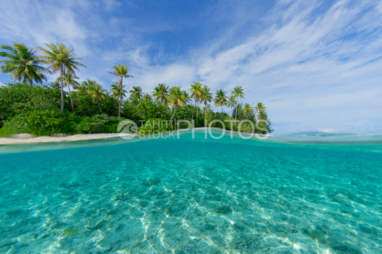 bora bora, islet and coconut trees