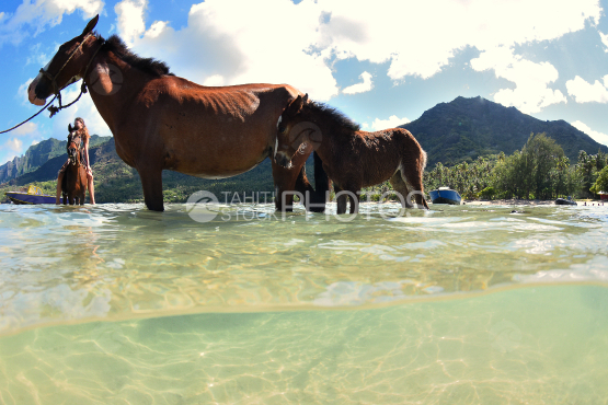 horses on a beach in nuku hiva, marquises islands