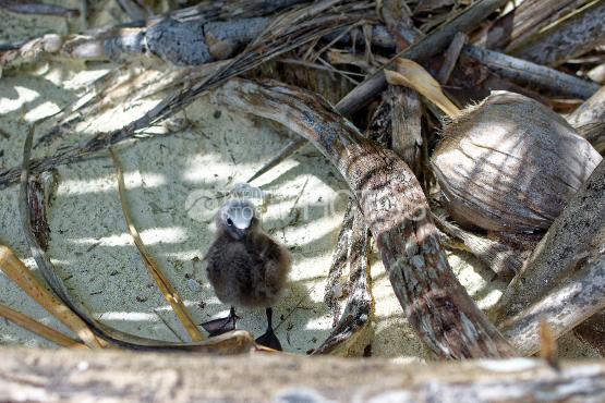 tetiaroa birds