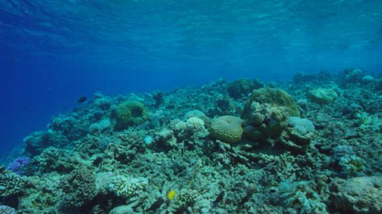 Rangiroa, coral reef, 4K UHD