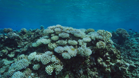 Rangiroa, bleaching coral of the reef, 4K UHD