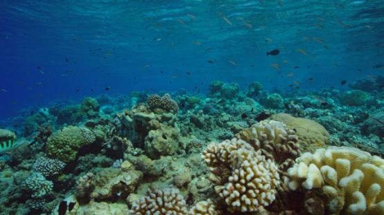 Rangiroa, undersea life over the coral reef, 4K UHD