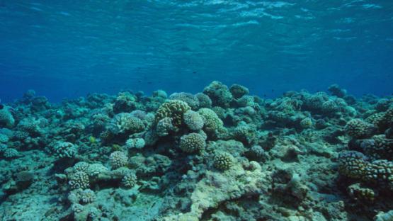 Rangiroa, coral reef of Tiputa, 4K UHD