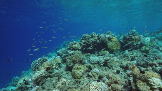 Rangiroa, undersea life along the coral reef, 4K UHD