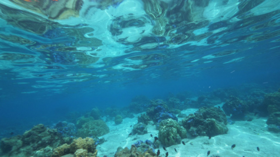 Tahiti, Coral garden in the clear water of the lagoon, 4K UHD